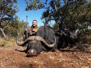 Umdende Hunting Safaris Buffalo
