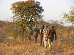 Hunters, PH'S and trackers walking after spoor