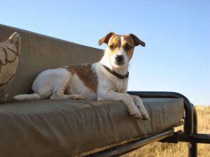 """Pups"" my trusty hunting partner"