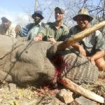 Umdende Hunting Safaris Elephant