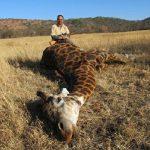 Umdende Hunting Safaris Giraffe