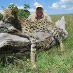Umdende Hunting Safaris Serval