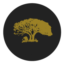 umdende-tree-300x300-0004