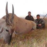 Umdende Hunting Safaris Eland