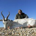 Umdende Hunting Safaris White Springbuck
